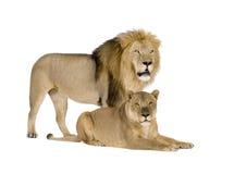 Lioness (8 years) - Panthera leo Stock Photos