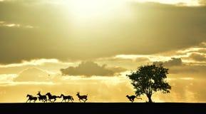 Lioness Chasing Prey