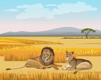 The lioness and the lion lay in the savanna royalty free illustration