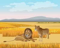The lioness and the lion in the savanna stock illustration