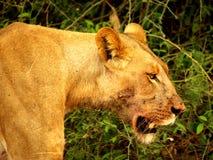 Sydliga afrikanska djur Royaltyfri Fotografi