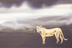 Lioness on the prowl. Original watercolour, Lioness on the prowl Royalty Free Stock Images