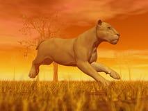 Lioness running Stock Image