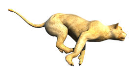 Lioness running for hunt. Side view Stock Photo