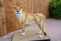 A Lioness  statue made from Lego bricks. CHESTER, UNITED KINGDOM - MARCH 27TH 2019: A Lioness  statue made from Lego bricks stock image
