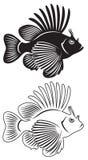 Lionfish ilustração royalty free
