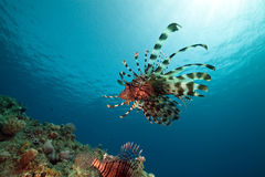 Lionfish And Ocean. Stock Photography