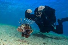 Lionfish común (volitans del Pterois) y buceador P subacuático imágenes de archivo libres de regalías