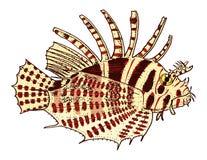 Lionfish di rosso della creatura del mare inciso disegnato a mano nel vecchio schizzo, stile d'annata nautico o marino, mostro o  Fotografie Stock