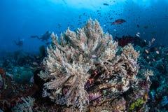 Lionfish e mergulhadores Fotografia de Stock