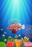 Lionfish e recifes de corais no mar imagem de stock royalty free