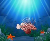 Lionfish e recifes de corais no mar imagens de stock royalty free