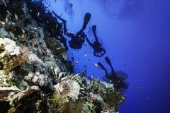 Lionfish e subaquei a Elphinstone Immagini Stock