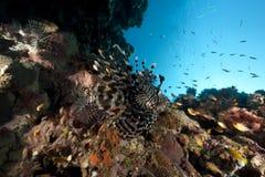 Lionfish and ocean Stock Photos