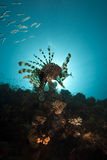Lionfish and ocean Royalty Free Stock Photography