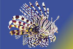 Lionfish with ocean background Royalty Free Stock Image