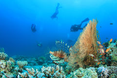 Lionfish and Scuba Divers Royalty Free Stock Photos