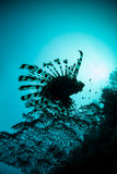 Lionfish Silhouette Stock Photo