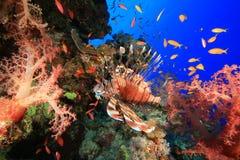 Lionfish und Korallenriff Lizenzfreies Stockfoto