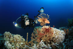 Lionfish and Underwater Photographer Stock Photo