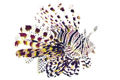 Lionfish with white background Royalty Free Stock Photography