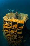 Lionfish Stock Photo
