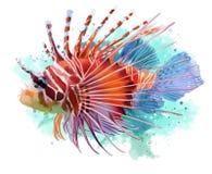 Lionfishvattenfärgmålning Royaltyfria Foton