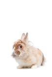 滑稽的兔子 库存图片