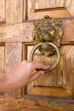 Lionhead Klopfer Lizenzfreies Stockbild