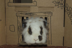 Lionhead rabbit looking out of cardboard castle. Small Lionhead rabbit with brown spots round eyes and on side of nose looking out of cardboard castle royalty free stock photos