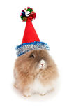 Lionhead rabbit in the New Year hat. In the Oriental calendar 2011 - the year of rabbit stock image