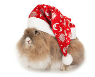 Lionhead rabbit in the New Year hat. Royalty Free Stock Images