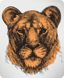 Lionne animale, main-dessin. Illustration de vecteur. Photos libres de droits