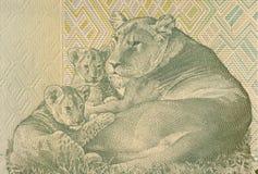 Lionne se trouvant avec deux Cubs Photographie stock libre de droits