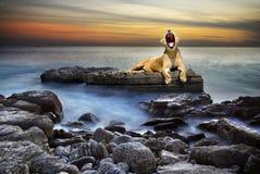 Lionne surréaliste Photos libres de droits