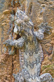 lionotum de glissement soutenu par lisse de gecko ou de Ptychozoon Images libres de droits