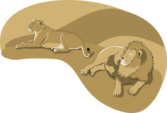 Lions Stock Images