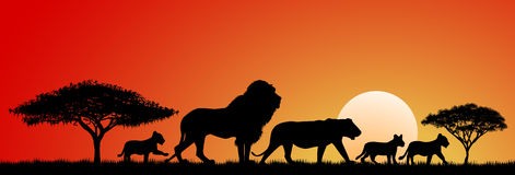 Lions africains illustration stock