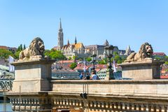 Lions of Chain bridge with Fisherman`s Bastion at background, Budapest, Hungary royalty free stock photo