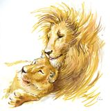 Lions couple in love. Lions family lies on a grass. They are happy and in love Royalty Free Stock Photo