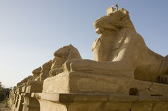 Lions of egypt Stock Image