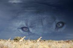 Lions eyes Stock Photo