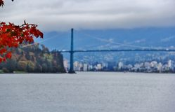 Lions Gate Bridge, Fall Color, Autumn leaves, City Landscape in Stanley Paark, Downtown Vancouver, British Columbia Stock Image