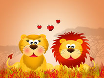 Lions in love Stock Photos