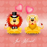 Lions in love Royalty Free Stock Photos