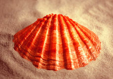 Lions Paw stock photos