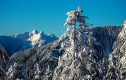 Lions peaks from Grouse Mountain Vancouver Royalty Free Stock Photo
