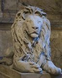 Lions on the staircase of Boston Pubic Library. At the turn of t royalty free stock photos