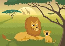 Lions in the Wild. The King of the animal kingdom is teaching the young successor to the throne how to roar. No transparency used. Basic (linear) gradient used Stock Image