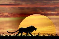lionsolnedgång vektor illustrationer